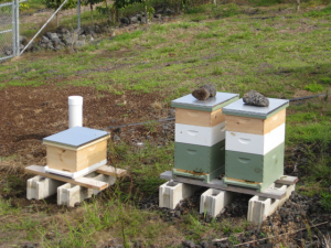 201604-bee-hives-300x225.png